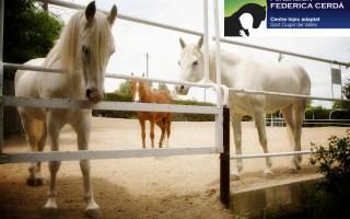 Apadrina un caballo