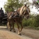 acell_jornada_a_caballo_fundacion_federica_cerda_18