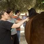 acell_jornada_a_caballo_fundacion_federica_cerda_20